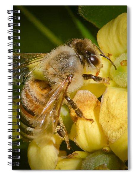 Bees Gathering From Pittosporum Flowers Spiral Notebook