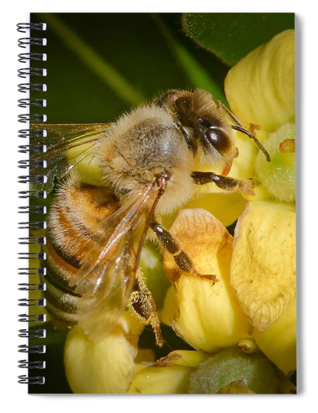 Spiral Notebook featuring the photograph Bees Gathering From Pittosporum Flowers by Jim Thompson