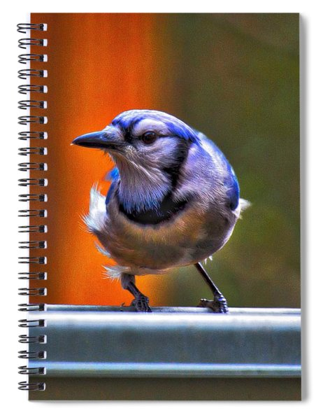 Spiral Notebook featuring the photograph Bluejay by Robert L Jackson