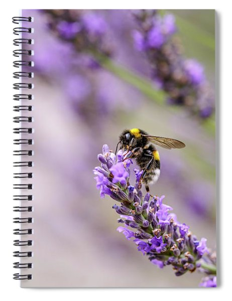 Bumblebee And Lavender Spiral Notebook