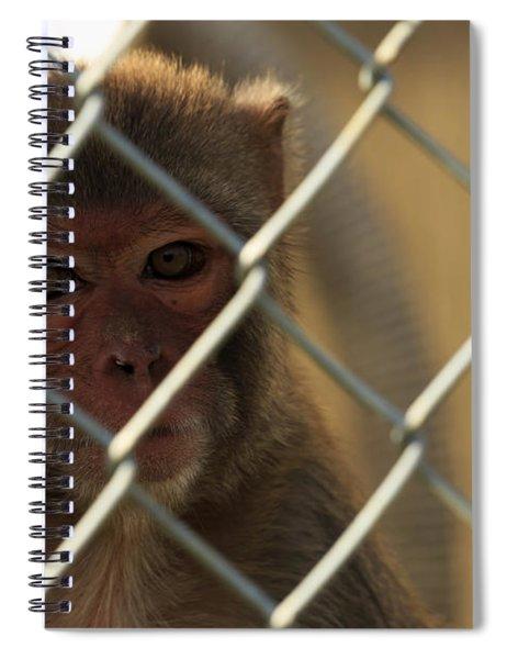 Caged Monkey Spiral Notebook