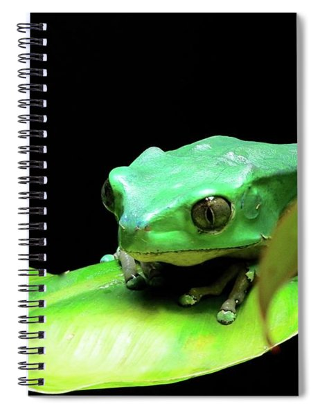 Re Upload Feeling Froggy Spiral Notebook