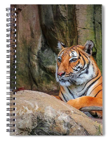 Spiral Notebook featuring the photograph Fort Worth Zoo Tiger by Robert Bellomy