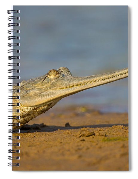 Gharial In India Spiral Notebook