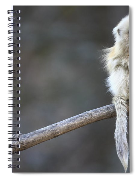 Golden Snub-nosed Monkey Rhinopithecus Spiral Notebook by Cyril Ruoso