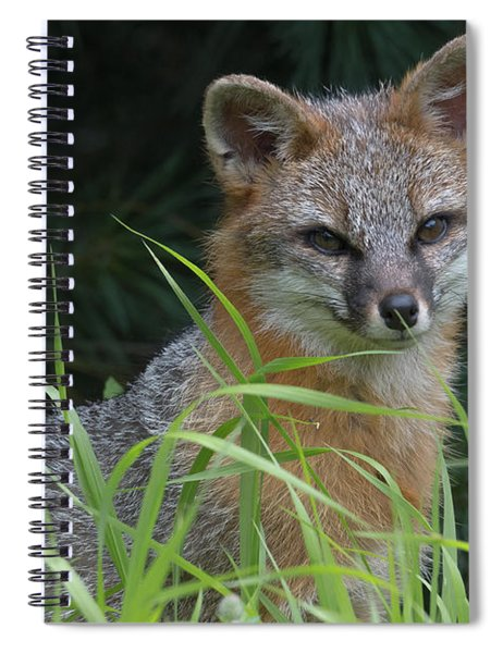 Gray Fox In The Grass Spiral Notebook