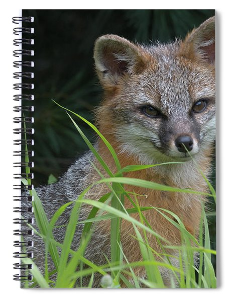 Gray Fox In The Grass Spiral Notebook