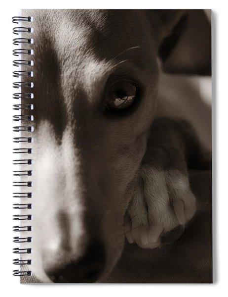 Heart You Italian Greyhound Spiral Notebook