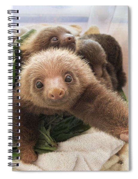 Hoffmanns Two-toed Sloth Choloepus Spiral Notebook