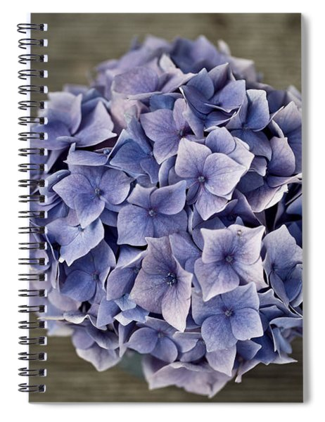 Hortensia Flowers Spiral Notebook
