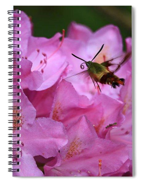 Hummingbird Moth Spiral Notebook