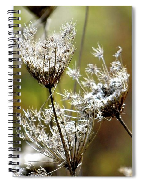 Re Upload Queen Ann's Lace Spiral Notebook