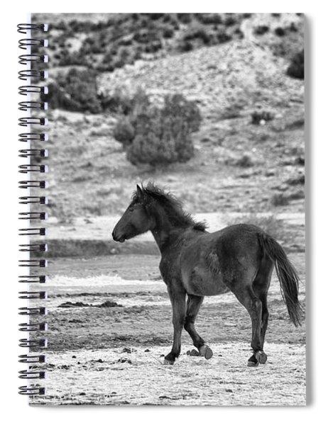 Virginia Range Mustangs Spiral Notebook