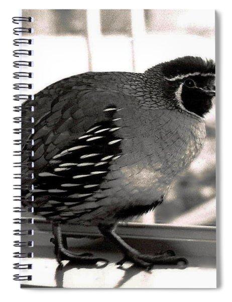 20_she Did Not Need A Regular Spiral Notebook