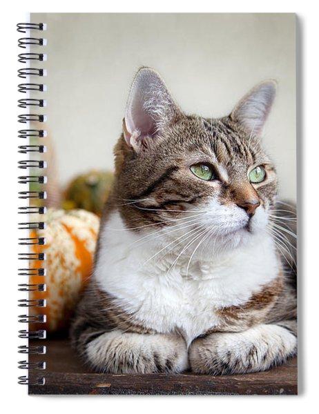 Cat And Pumpkins Spiral Notebook