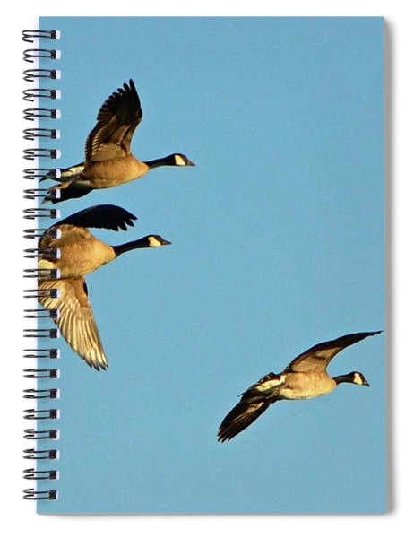 3 Geese In Flight Spiral Notebook