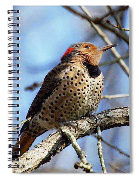 Northern Flicker Woodpecker Spiral Notebook