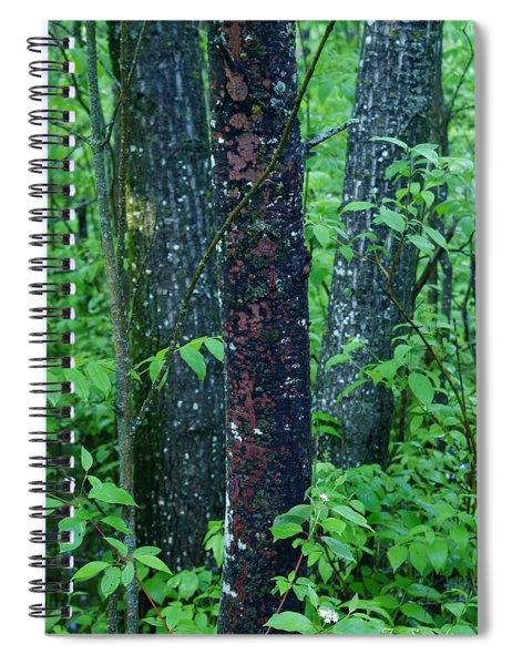 3 Trees Spiral Notebook