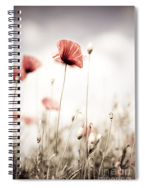 Corn Poppy Flowers Spiral Notebook by Nailia Schwarz