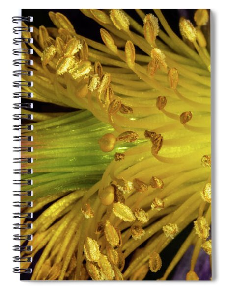 Purple And Yellow Spiral Notebook