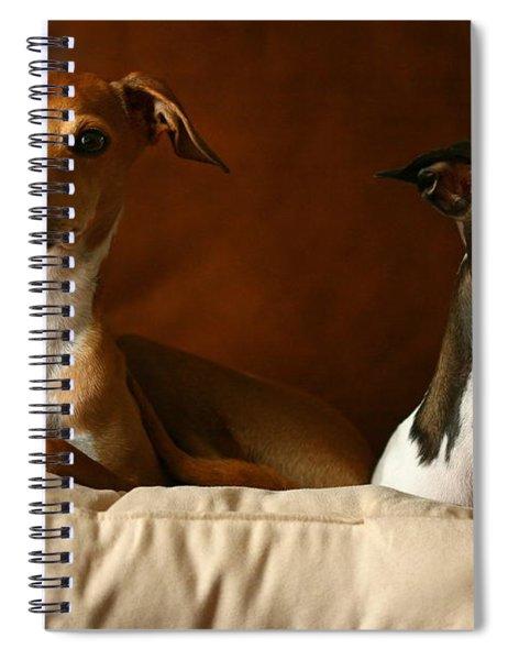 Italian Greyhounds Spiral Notebook
