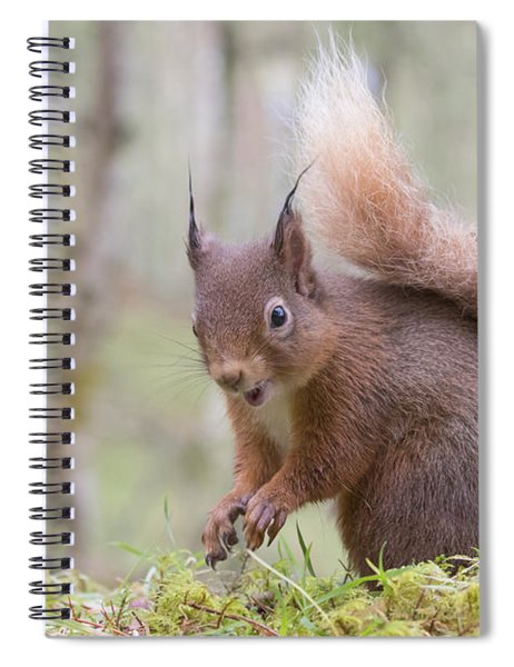 Red Squirrel - Scottish Highlands #8 Spiral Notebook