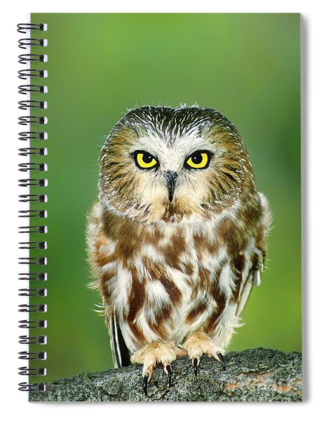 Northern Saw-whet Owl Aegolius Acadicus Wildlife Rescue Spiral Notebook