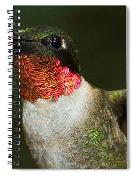 Spiral Notebook featuring the photograph Ruby-throated Hummingbird by Robert L Jackson