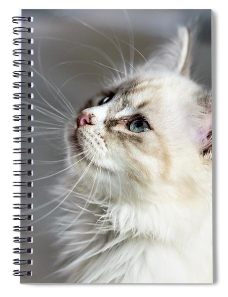 Cat Spiral Notebook