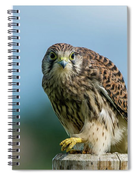 A Beautiful Young Kestrel Looking Behind You Spiral Notebook