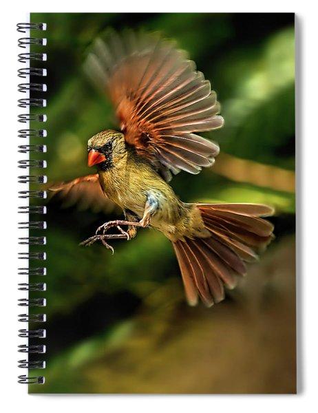 A Cardinal Approaches Spiral Notebook