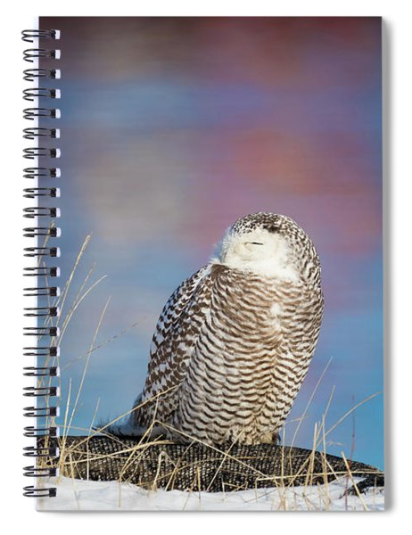 A Colorful Snowy Owl Spiral Notebook