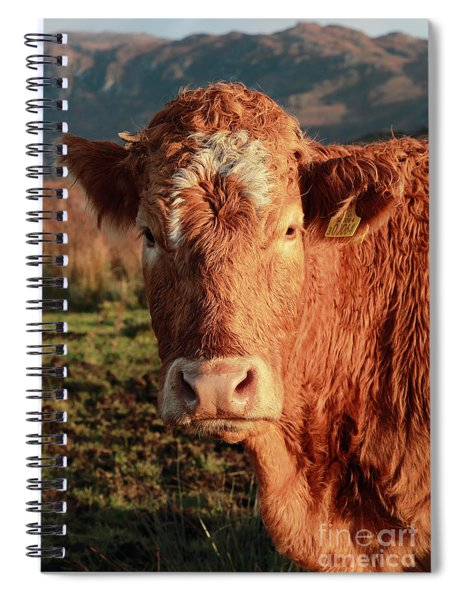 A Curious Red Cow Spiral Notebook