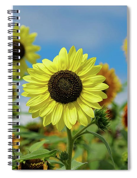 A Day With Sunflowers Spiral Notebook