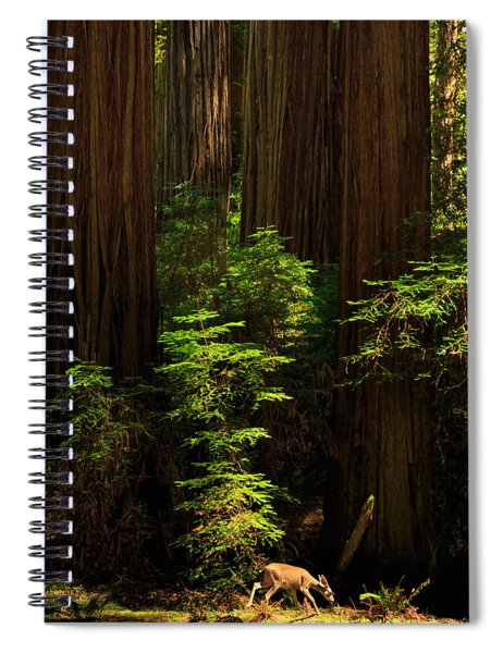A Deer In The Redwoods Spiral Notebook