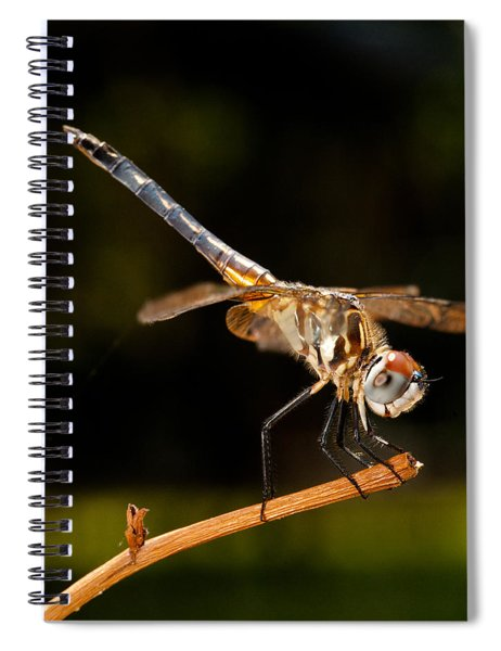 A Dragonfly Spiral Notebook