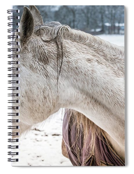 A Girlfriend Of The Horse Amigo Spiral Notebook