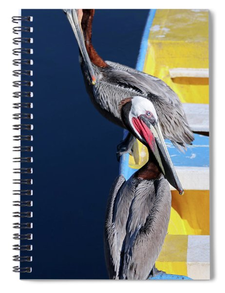 A Pair Of Brown Pelicans On A Blue And Yellow Rowboat Spiral Notebook