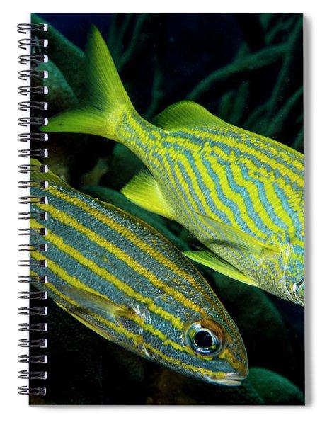 A Pair Of Grunts Spiral Notebook