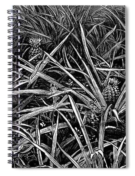 A Pineapple Field Near Nassau, Bahamas, 1883 Spiral Notebook