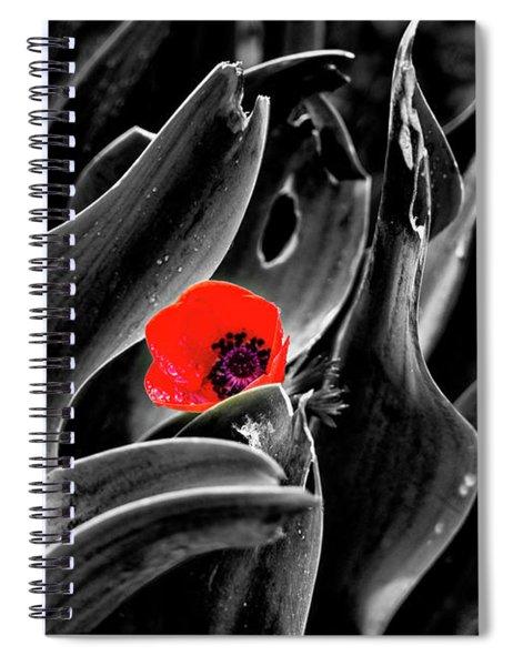 A Red Dot L.k. Spiral Notebook by Arik Baltinester
