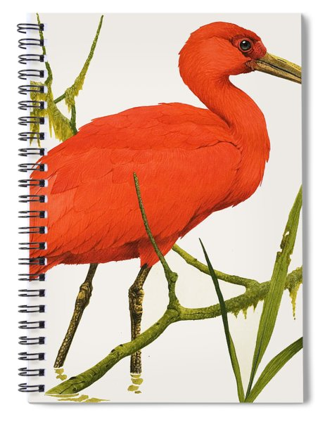 A Scarlet Ibis From South America Spiral Notebook