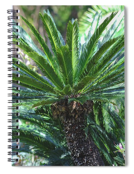 A Shady Palm Tree Spiral Notebook