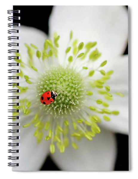 A Spot Of Red Spiral Notebook
