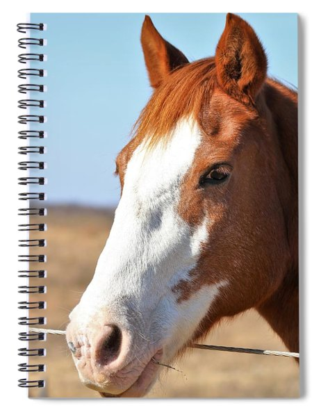 A Sweet Face - Horse Portrait Spiral Notebook