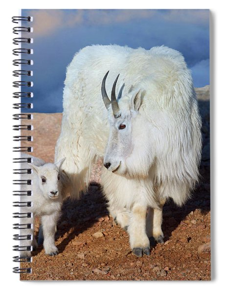 Above The Clouds. Mother And Kid - A Young Rocky Mountain Goat Stands Inquisitively Next To Its Mom Spiral Notebook