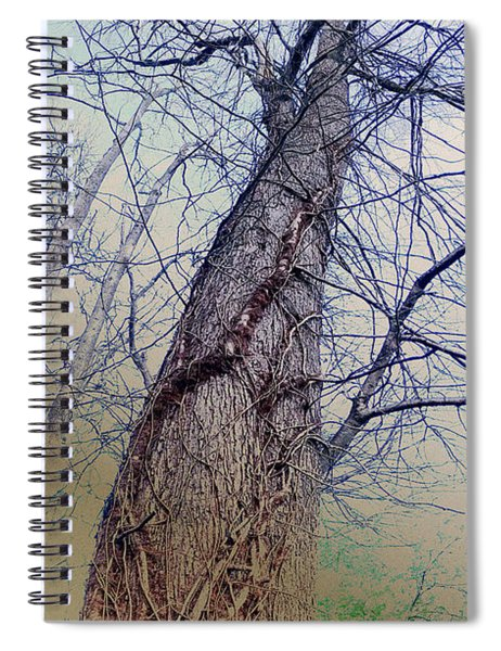 Abstract Tree Trunk Spiral Notebook