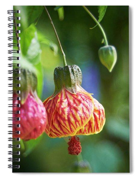 Abutilon Spiral Notebook
