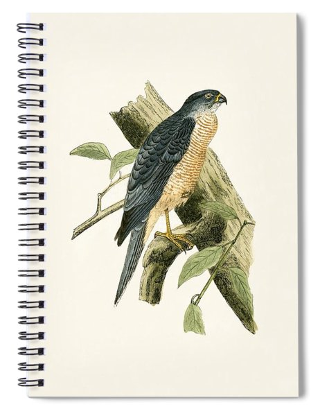 Accipiter Sphenurus Spiral Notebook