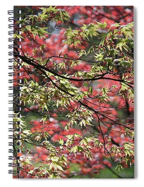 Acer Leaves In Spring Spiral Notebook